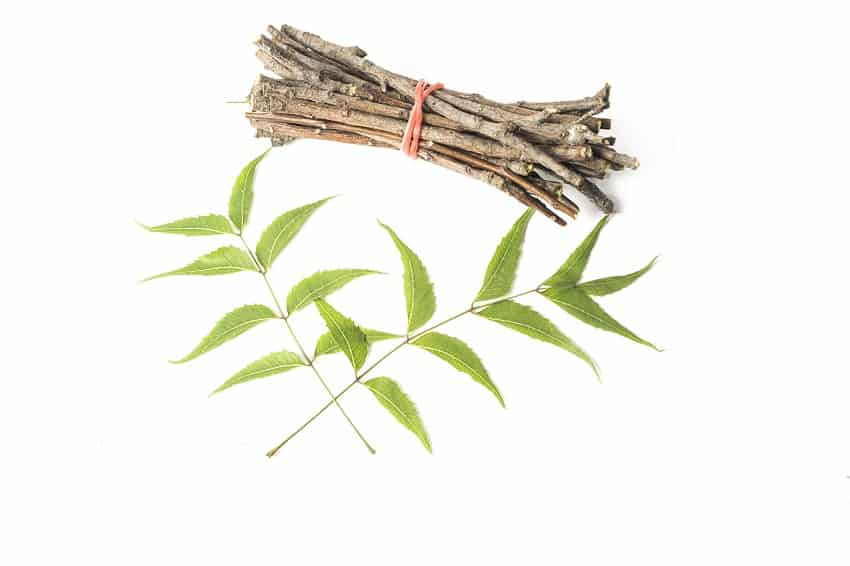 neem tree stick