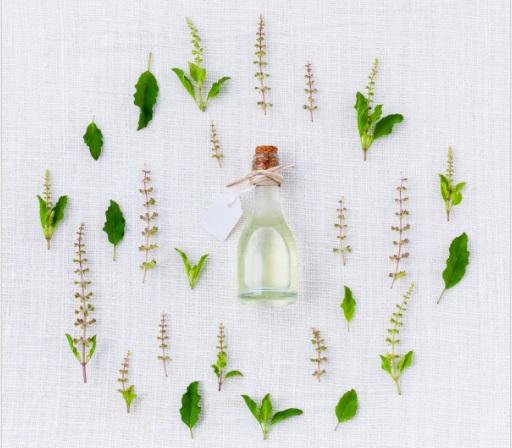 Medicinal use of Tulsi Leaves